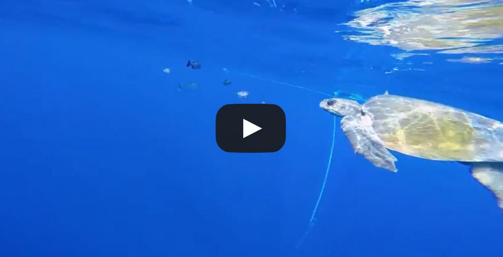 Vidéo: Un plongeur sauve une tortue de filets de pêche, sa réaction va être surprenante!