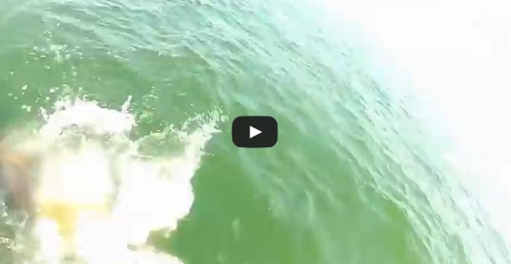 Vidéo: Un poisson dévore un requin