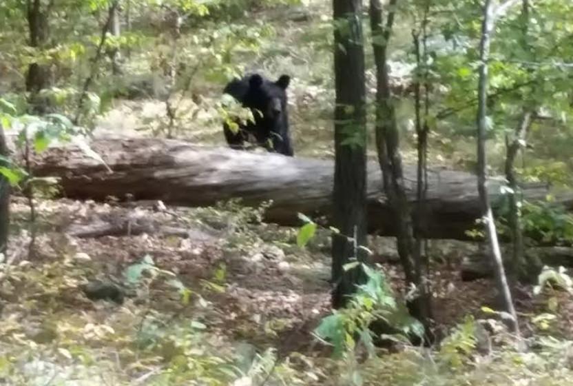 Il se fait dévorer par l'ours qu'il vient de prendre en photo