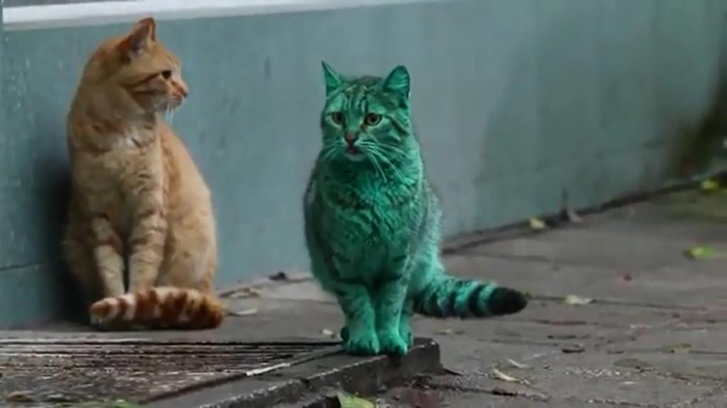 Le mystère du chat vert enfin découvert