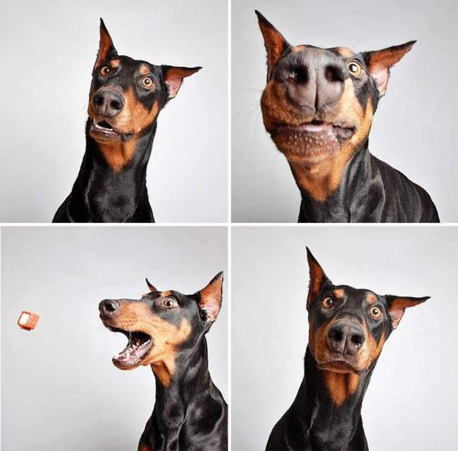 Ces drôles de photos ont permis de sauver ces chiens abandonnés