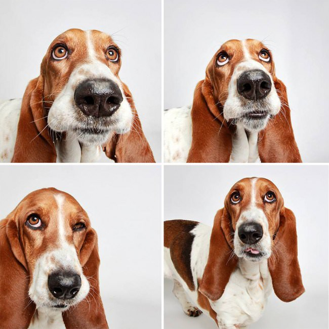 chiens-photomaton-12
