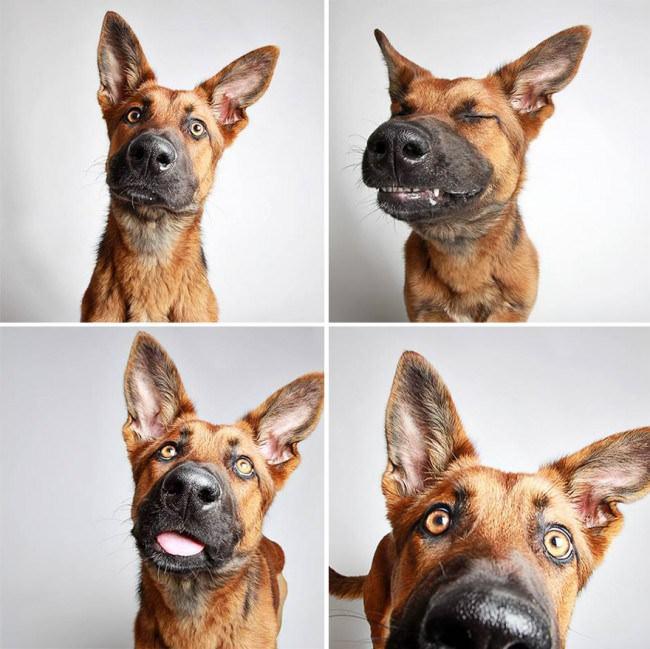 chiens-photomaton-2