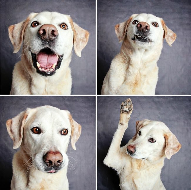chiens-photomaton-5