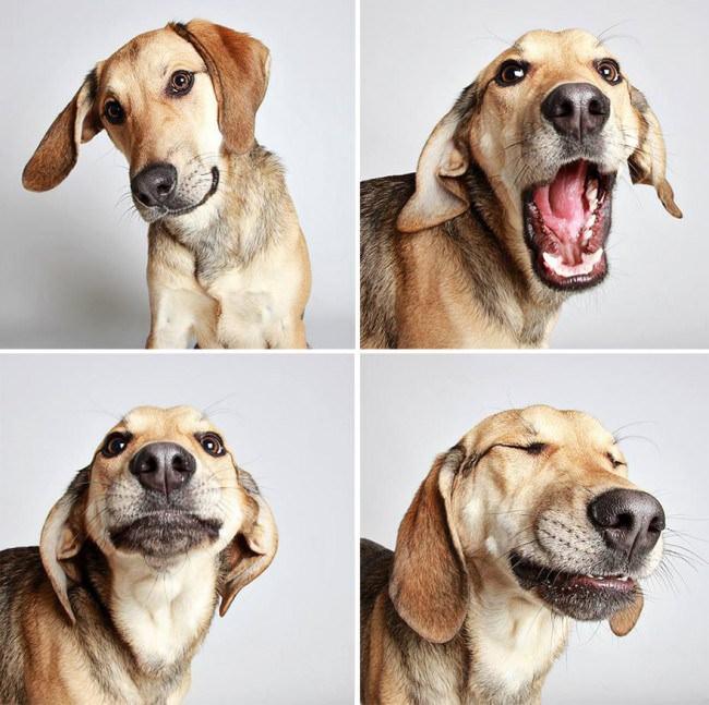 chiens-photomaton-7