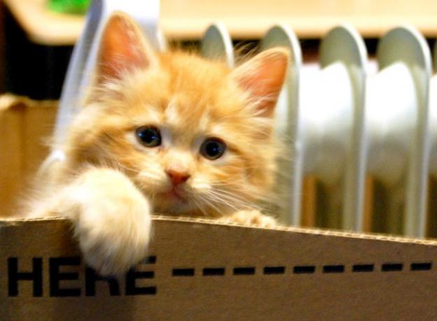 Son chat compose le numéro des urgences et lui sauve la vie