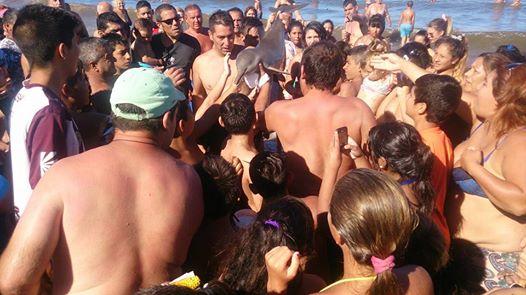 Les touristes se battent pour prendre un selfie avec un bébé dauphin… et le tuent