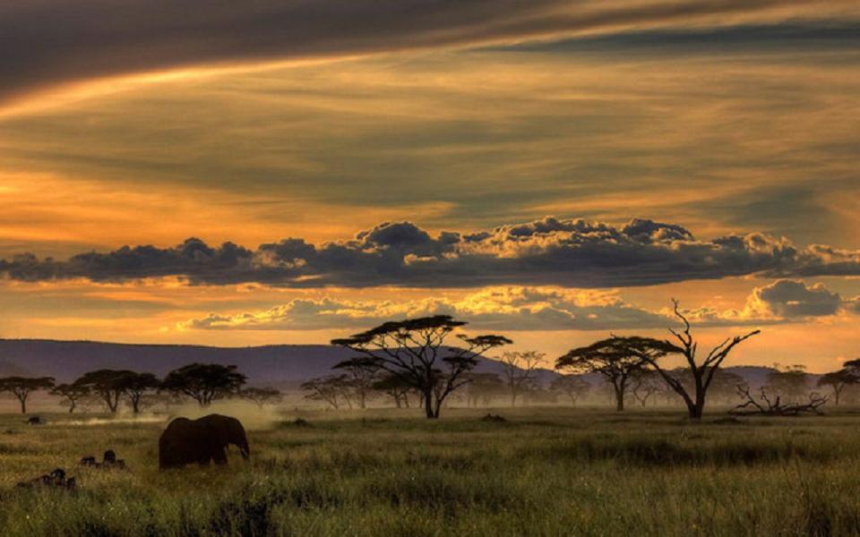 Un safari en Tanzanie...