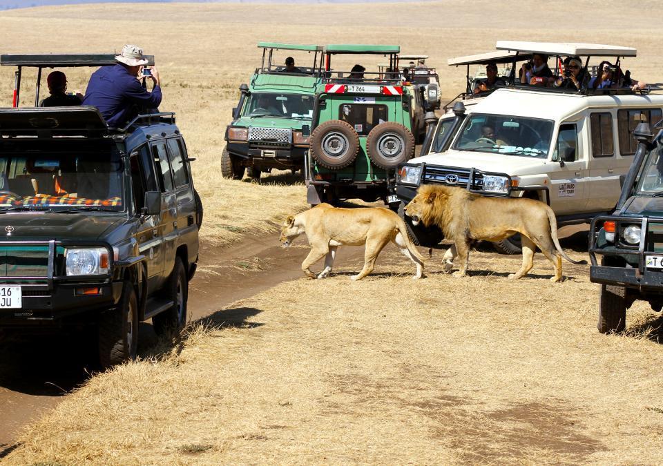 ... où l'on n'est pas seul avec les animaux de la savane