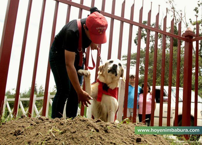 Séisme en Equateur: Un chien meurt de fatigue après avoir sauvé la vie de 7 personnes