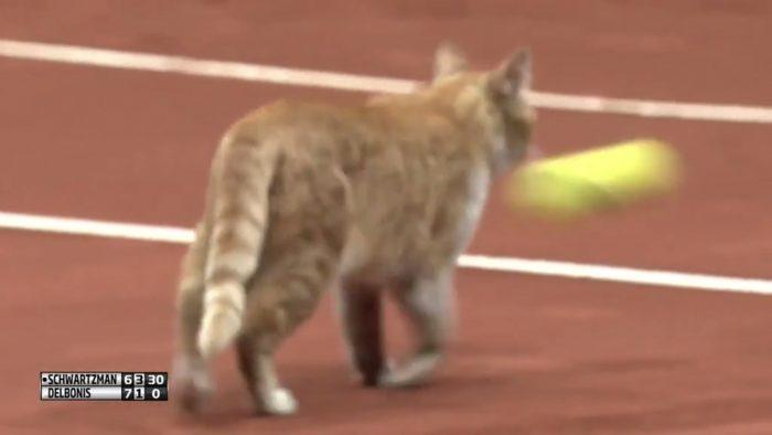 Un joueur de tennis tire volontairement sur un chat en plein match