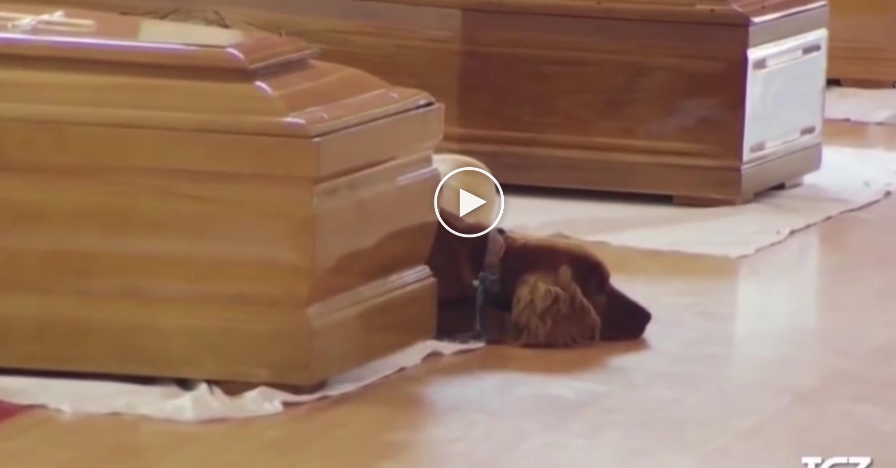 Un chien refuse de quitter le cercueil de son ma tre d c d lors du s isme en - Purifier son appartement ...