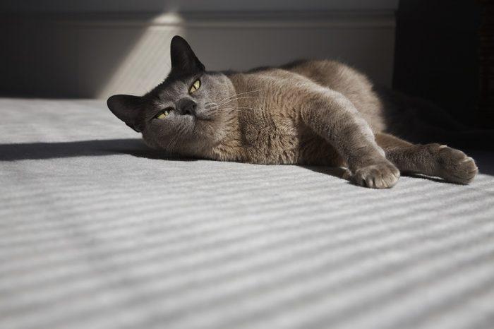 Les experts sont formels: votre chat a l'ambition de vous tuer