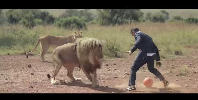 Vidéo: Un zoologue joue au foot avec des lions