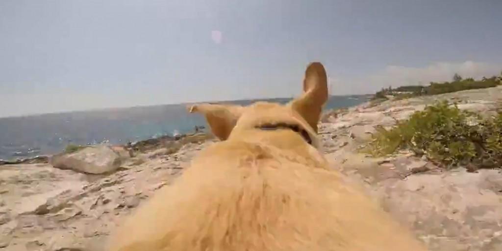 Vidéo: Vous n'imaginerez pas pourquoi ce chien court comme un fou
