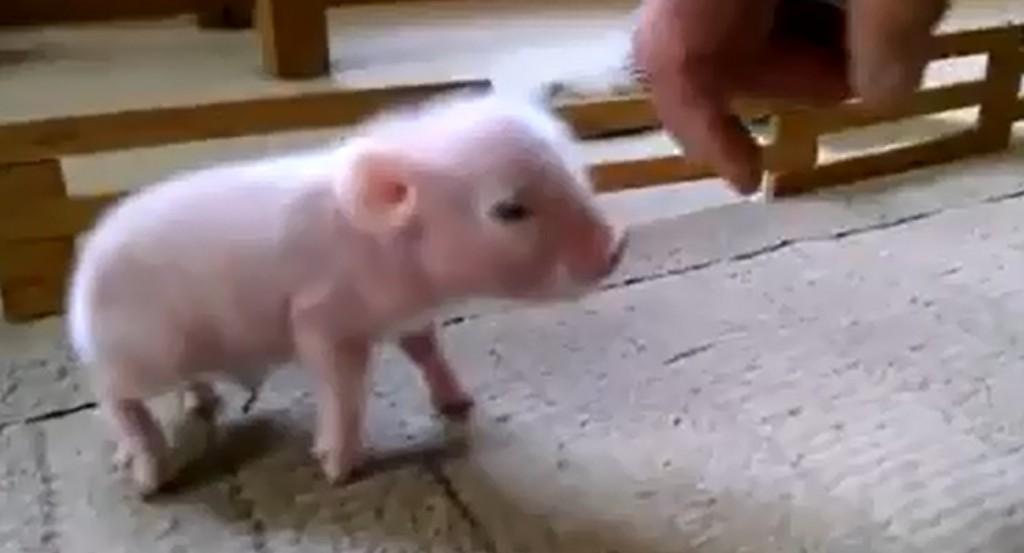 Vidéo: Un animal de compagnie très spécial