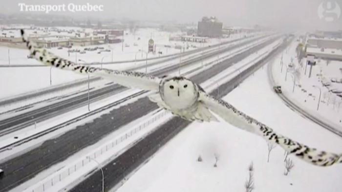 Une caméra de surveillance capture des images magnifiques très rares