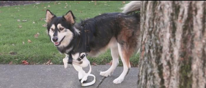 Des organisateurs de combats de chiens poursuivis et attaqués… par leur chien