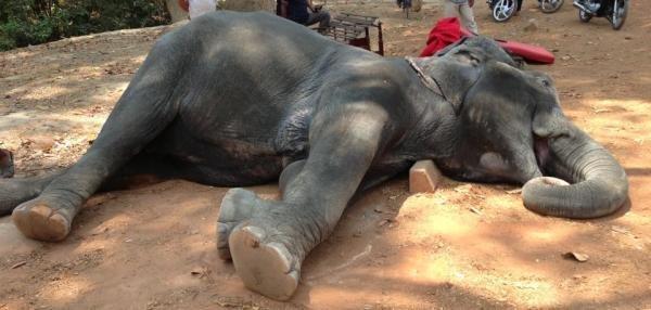 Voilà pourquoi il ne faut jamais encourager les promenades à dos d'éléphant !