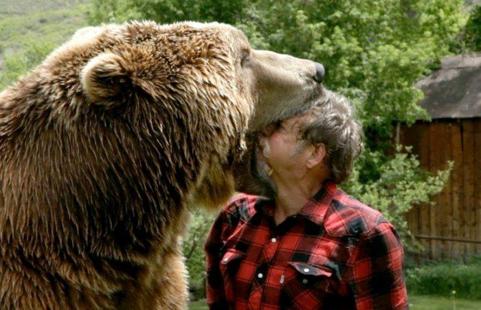 Un campeur attaqué par un ours brun